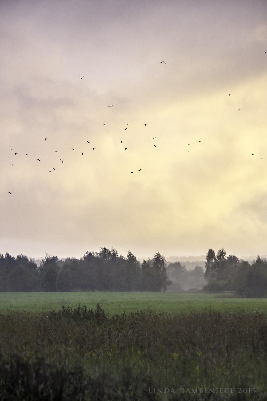 augusta lietus